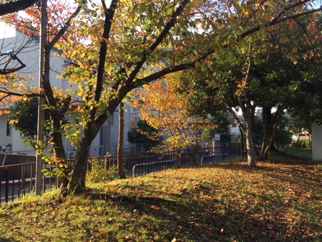 井尻公園2